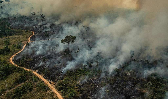 queimadas amazonia